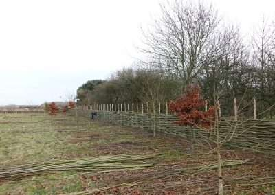 Burnham_Willow_Fencing